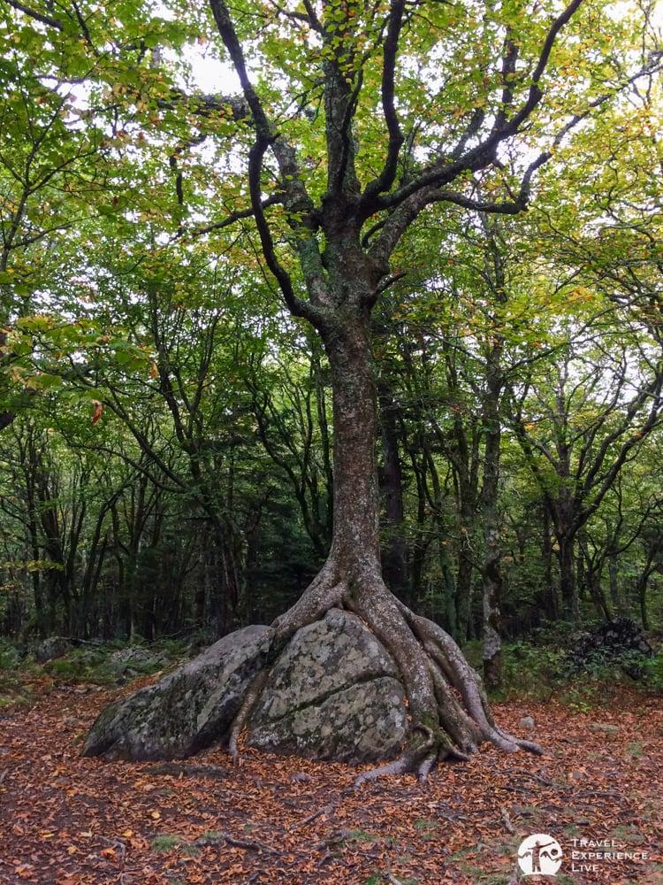 Wood versus rock