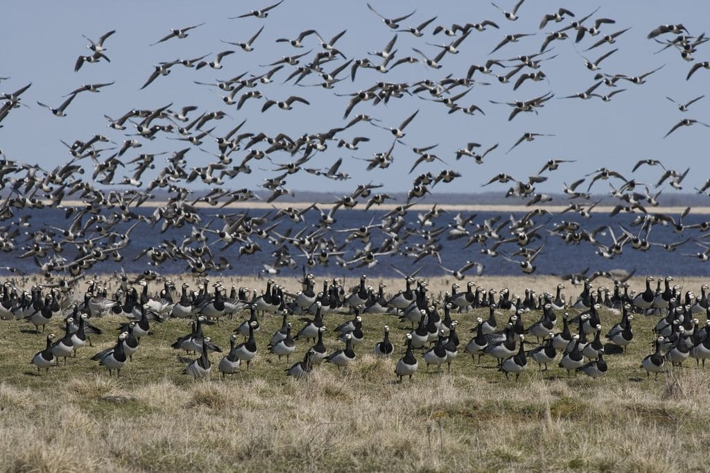 Bird watching in Estonia