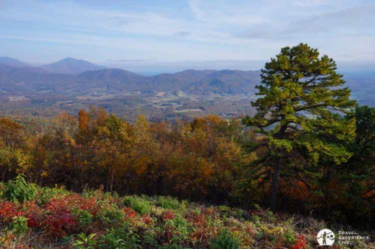 Pine Tree Overlook