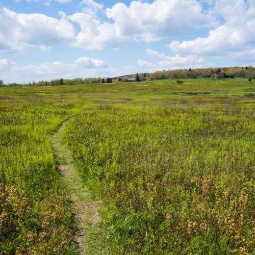 Trail in Big Meadows