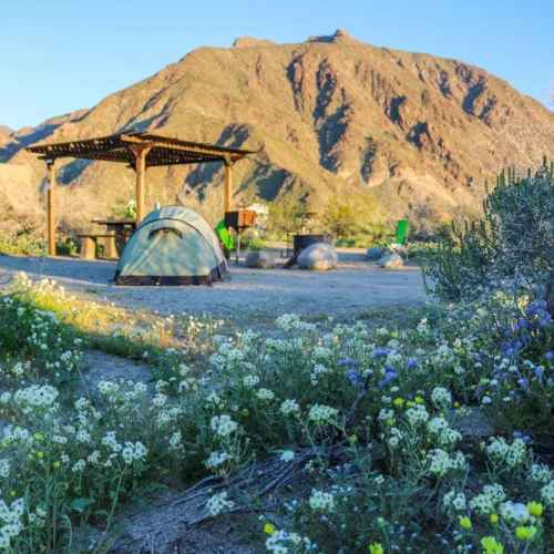 Camping amid wildflowers, Anza-Borrego Desert State Park