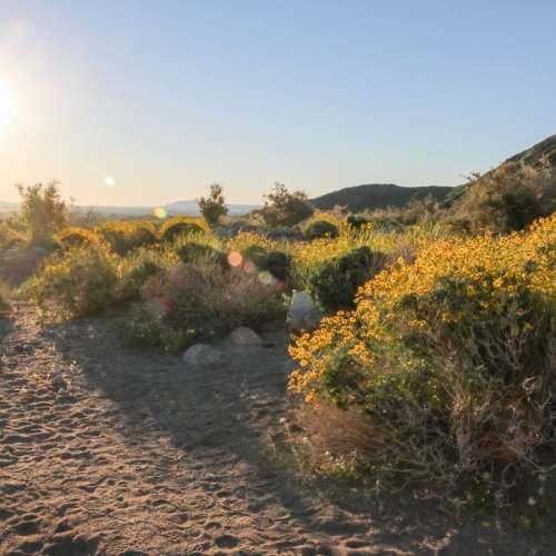 Sunrise in the Anza-Borrego Desert, California