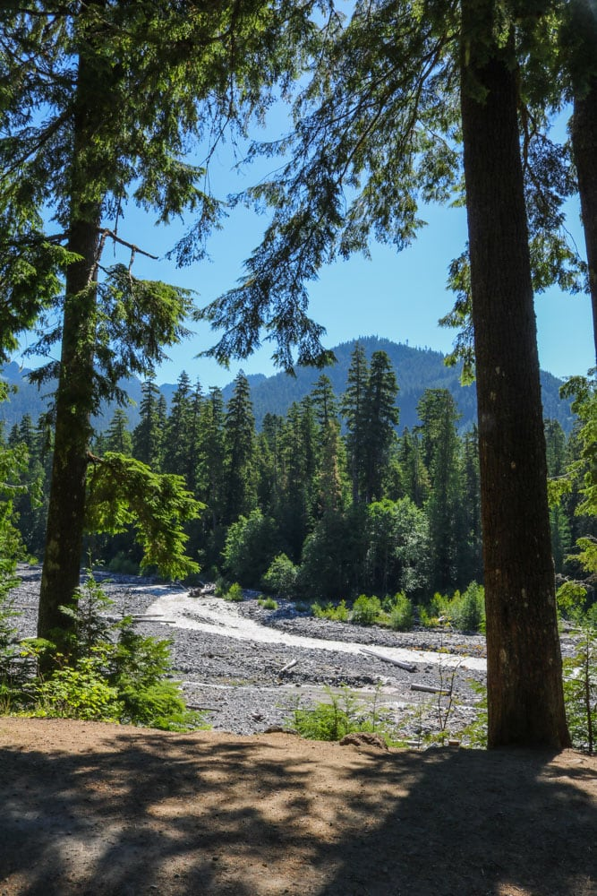 River and forest, Mount Rainier National Park