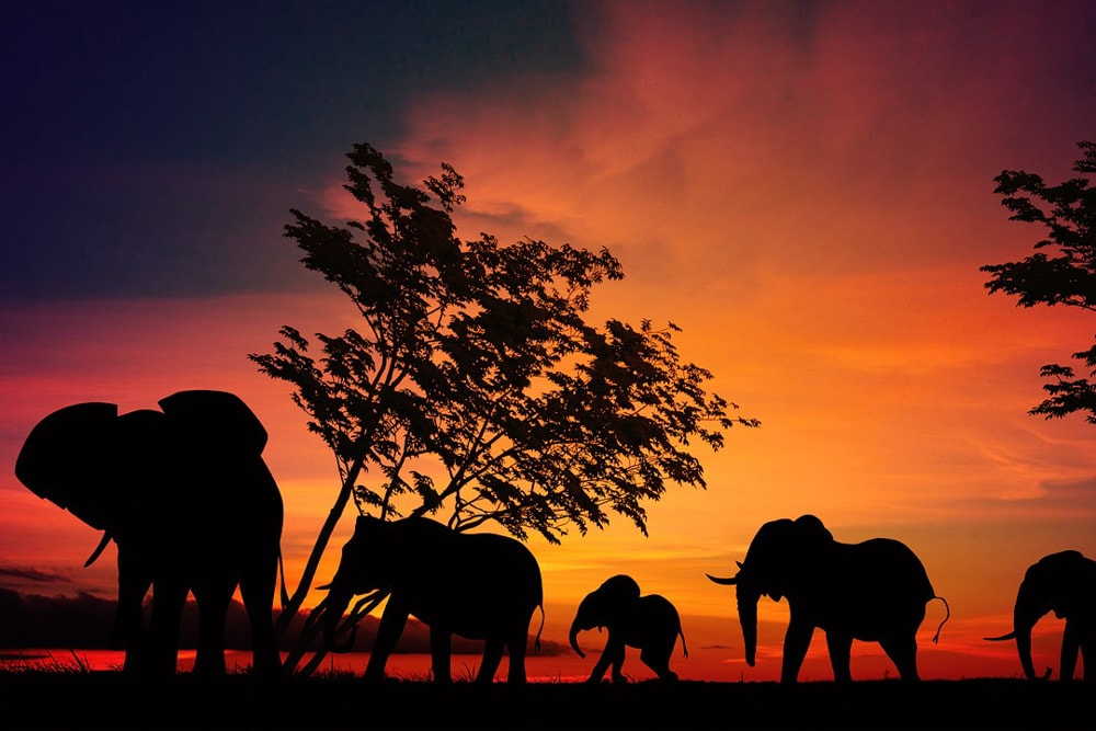 Most Beautiful National Parks in the World: Serengeti National Park