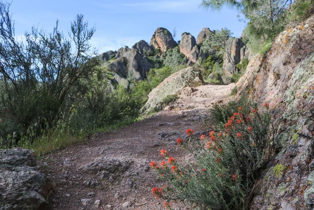 Wildflowers in Pinnacles National Park, California