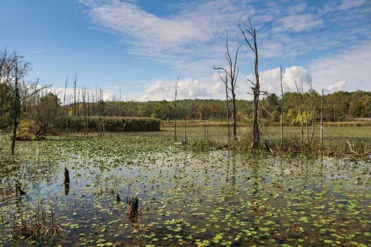 Beaver Marsh, Cuyahoga Valley National Park, Ohio
