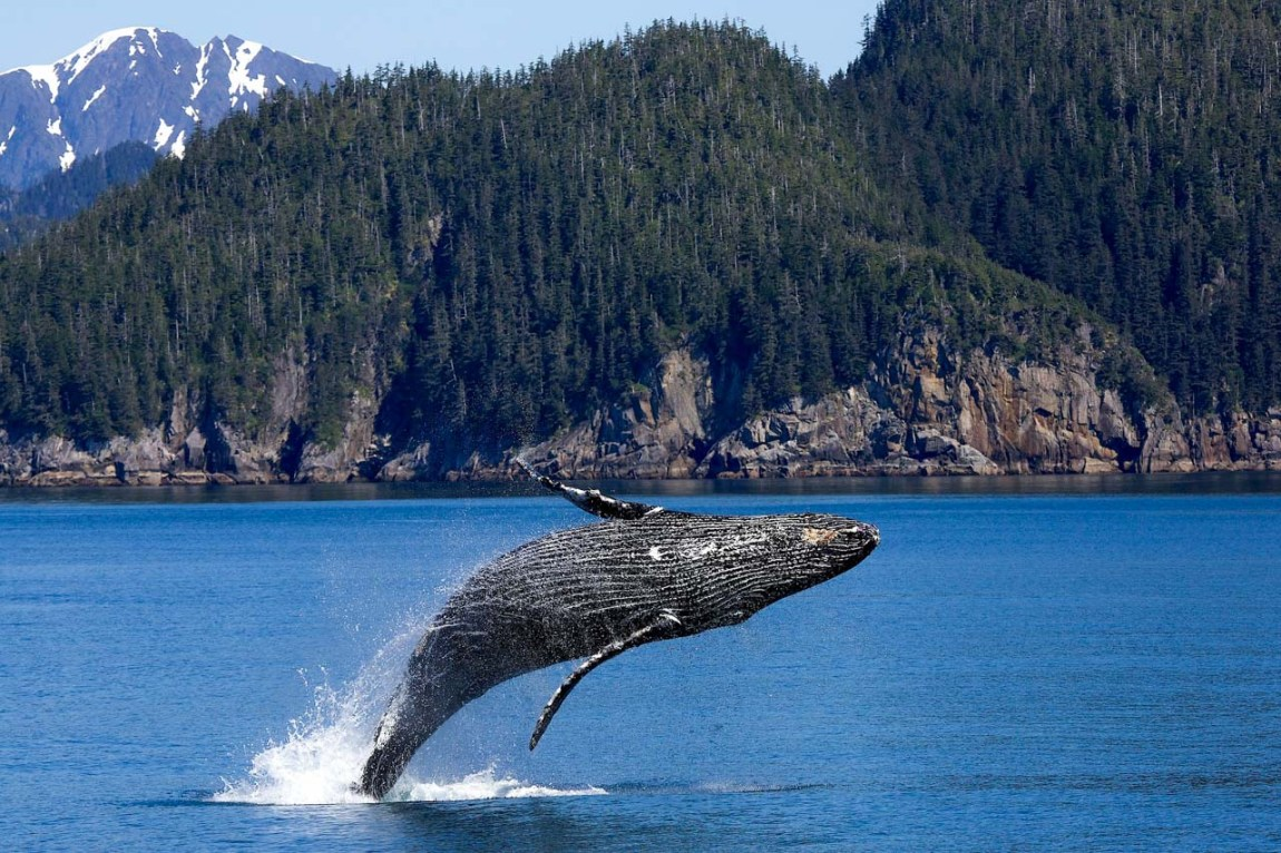 Kenai Fjords National Park, Alaska - Least-Visited and Most Underrated National Parks in America