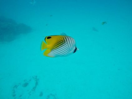 Poisson lagon bora bora