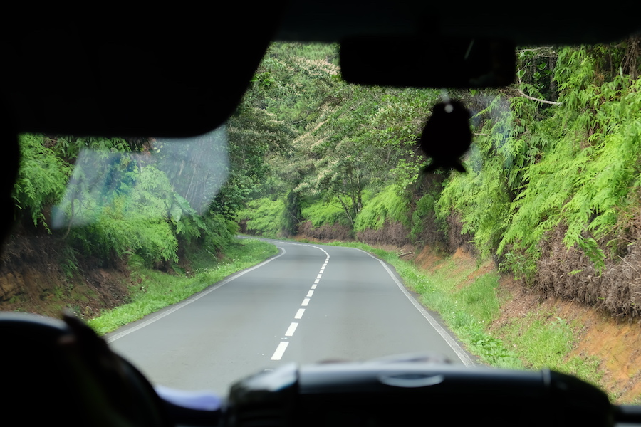 road-trip-guadeloupe-jungle