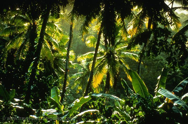 Pictures Of Australia Queensland 0026 Tropical Rainforest