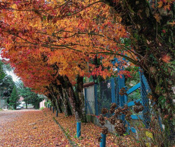 Ruas de Monte Verde no Outono