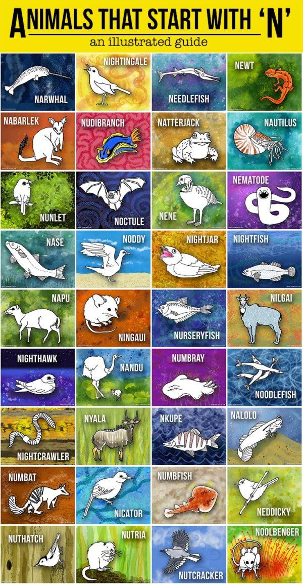 Animal Name In Alphabet N - Photos Alphabet Collections