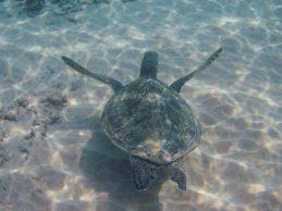 Maui Underwater-34