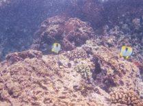 Maui Underwater-69