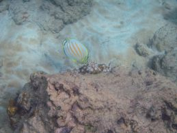 Maui Underwater-78
