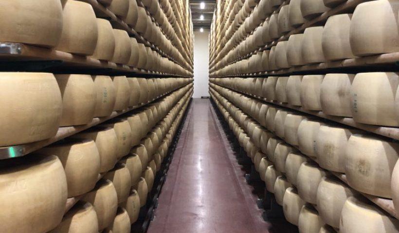 Parmesan Cheese Wheels at a Parmesan Factory in Modena