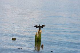 Wildlife on the Columbia River
