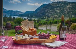 Picnic by the vines