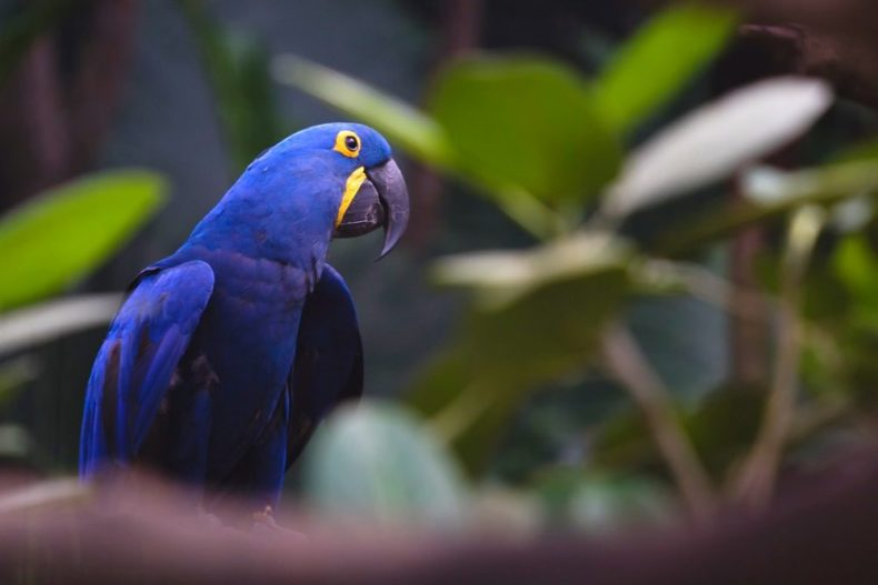 Locals are bird watching at jurong Bird park Singapore