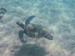 Maui Underwater-30-Edit