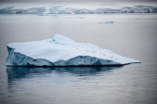 Antartica - Gerlache Strait