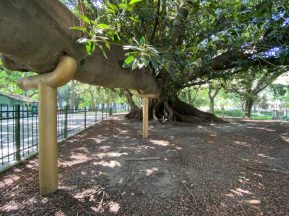 A gigantic ficus tree in Buenos Aires - on our Cruise to South America