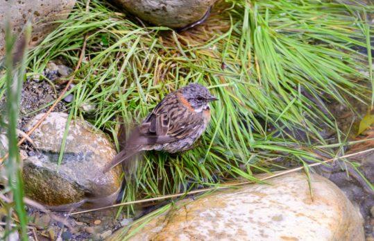 Random Birds on our Coral Princess Excursion in Ushuaia