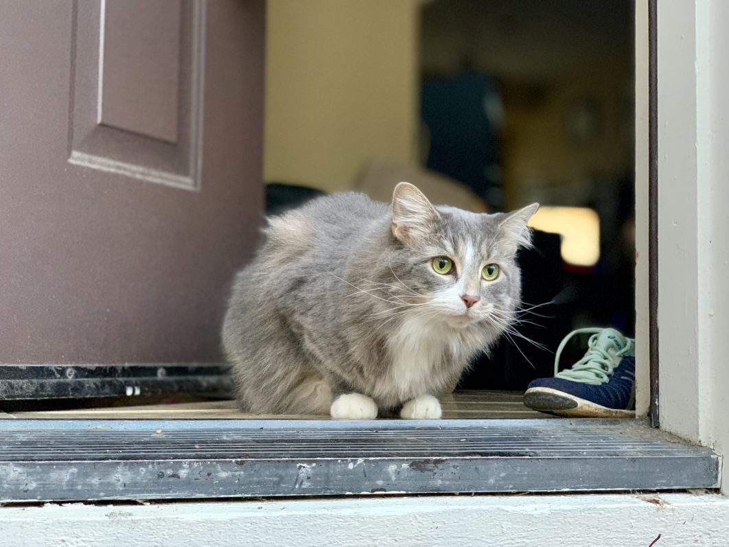 Rover app for cat sitting - cat looking out for cat sitter