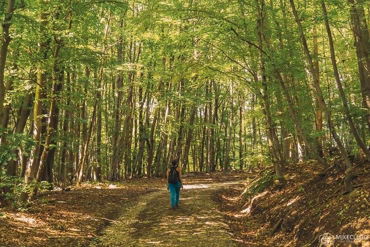 Caminhadas nos bosques de Viena