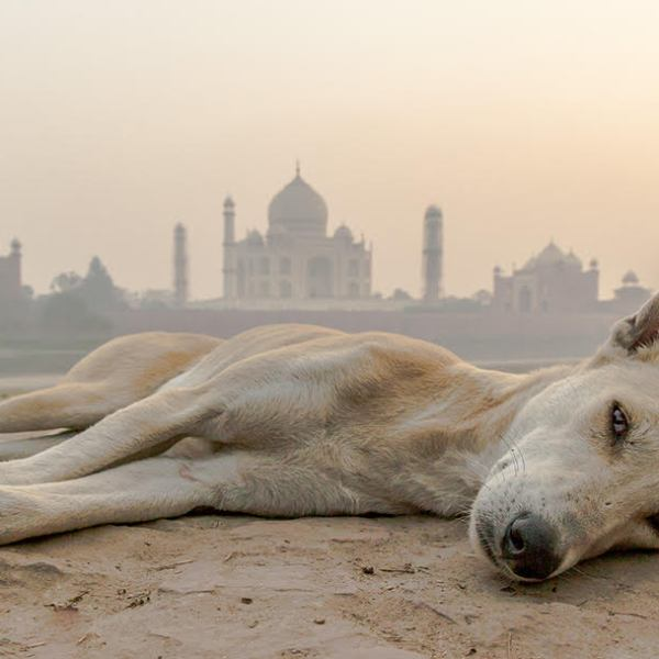 Taj Mahal, India - DanflyingSolo