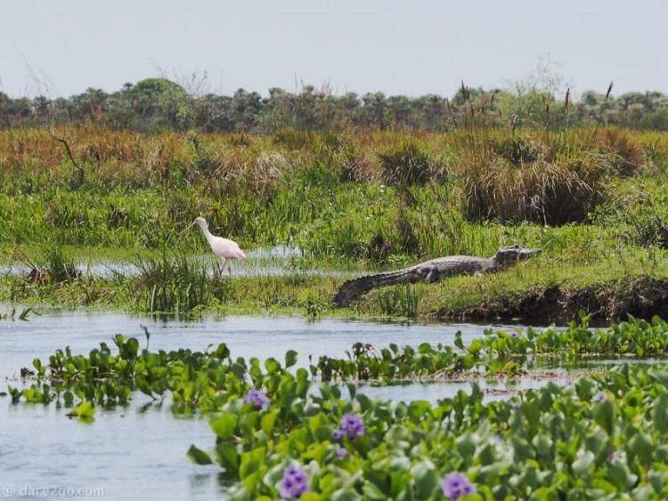 Ibera-wetlands por Juergen