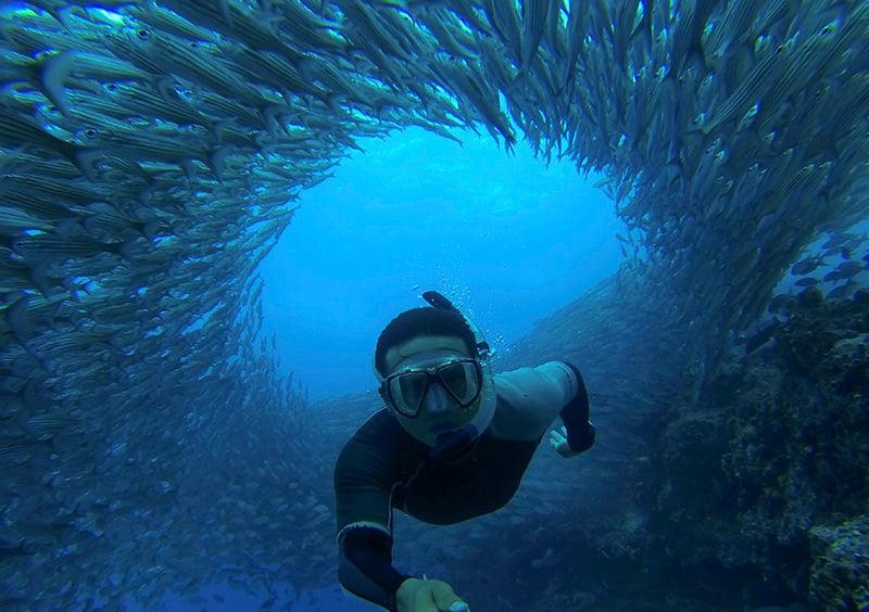 Cardume de peixes subaquáticos de Galápagos - Via G Adventures
