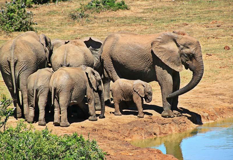 Elefantes no Parque Nacional Kruger