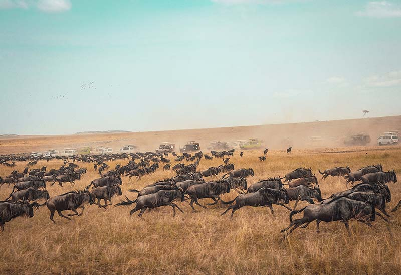 Natureza na Reserva Nacional Maasai Mara