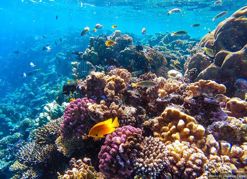Recife de coral subaquático do Mar Vermelho