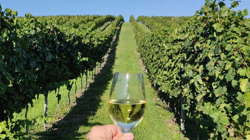 Vinho e vinhas em Viena