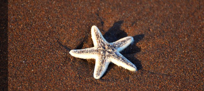 Photo Gallery : A date with a Star Fish