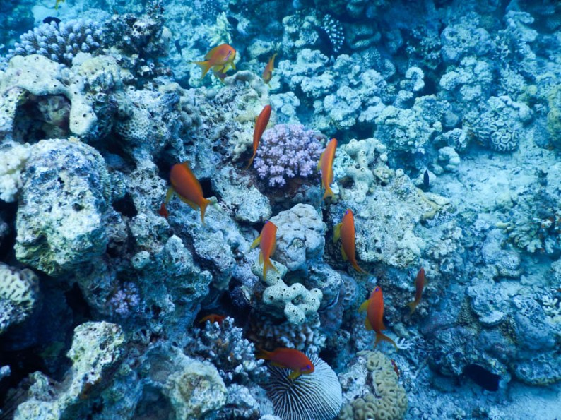 Duiken-aqaba-jordanie