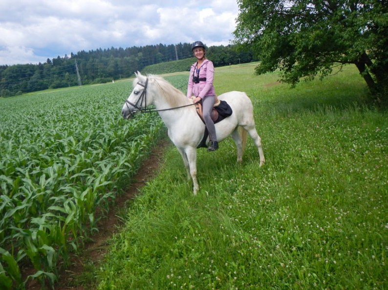 Paardrijden Radovljica