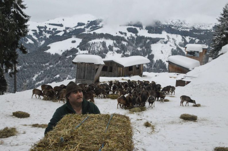Thumarsbach winterbos