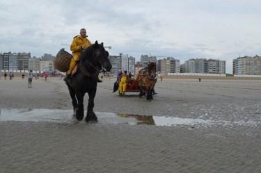 Garnaalvisserij te paard