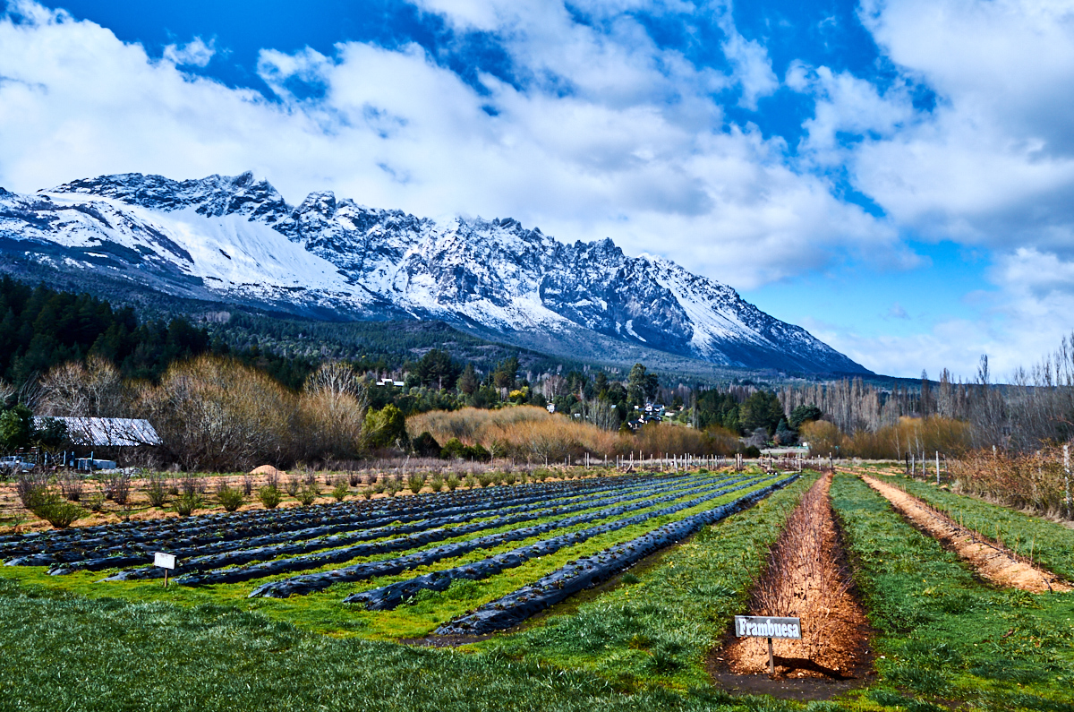 Patagonian raspberry farmlands in El Bolsón, Argentina