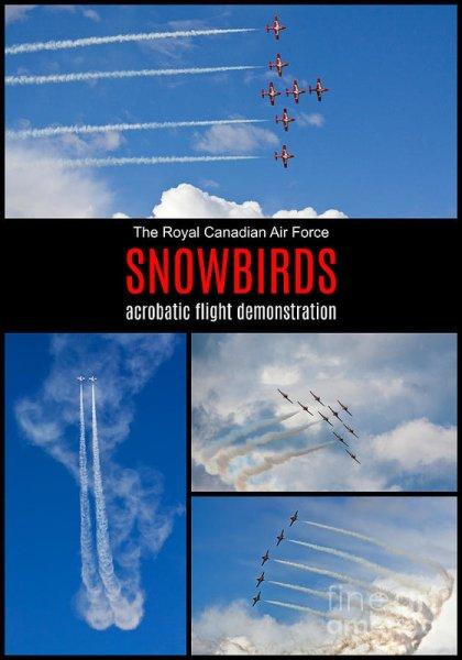 The Snowbirds in Flight poster