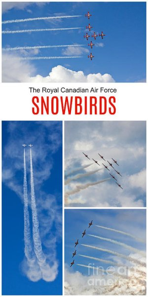 Snowbirds in flight poster