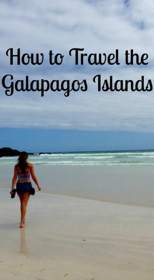 How to Travel the Galapagos