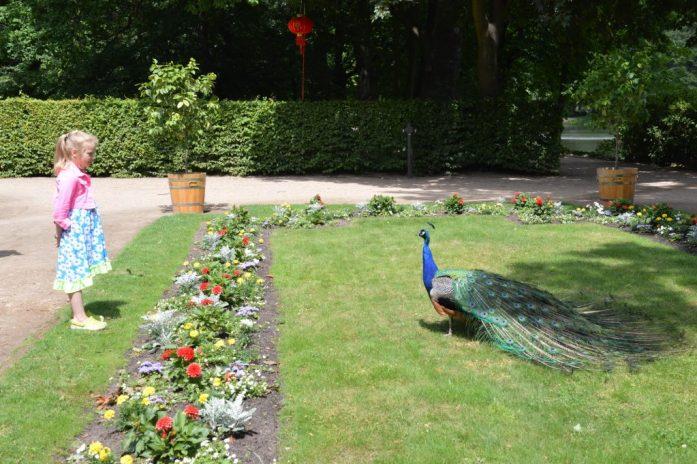 Peacock, Łazienki Park, Warsaw, Poland