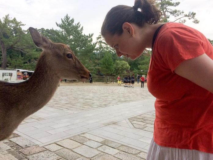 Bowing deer, Nara, Japan