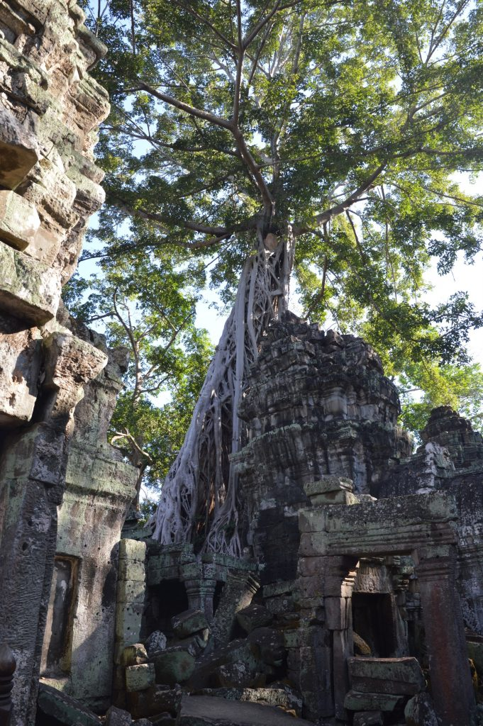 Ta Prohm, Angkor Archaeological Park, Cambodia
