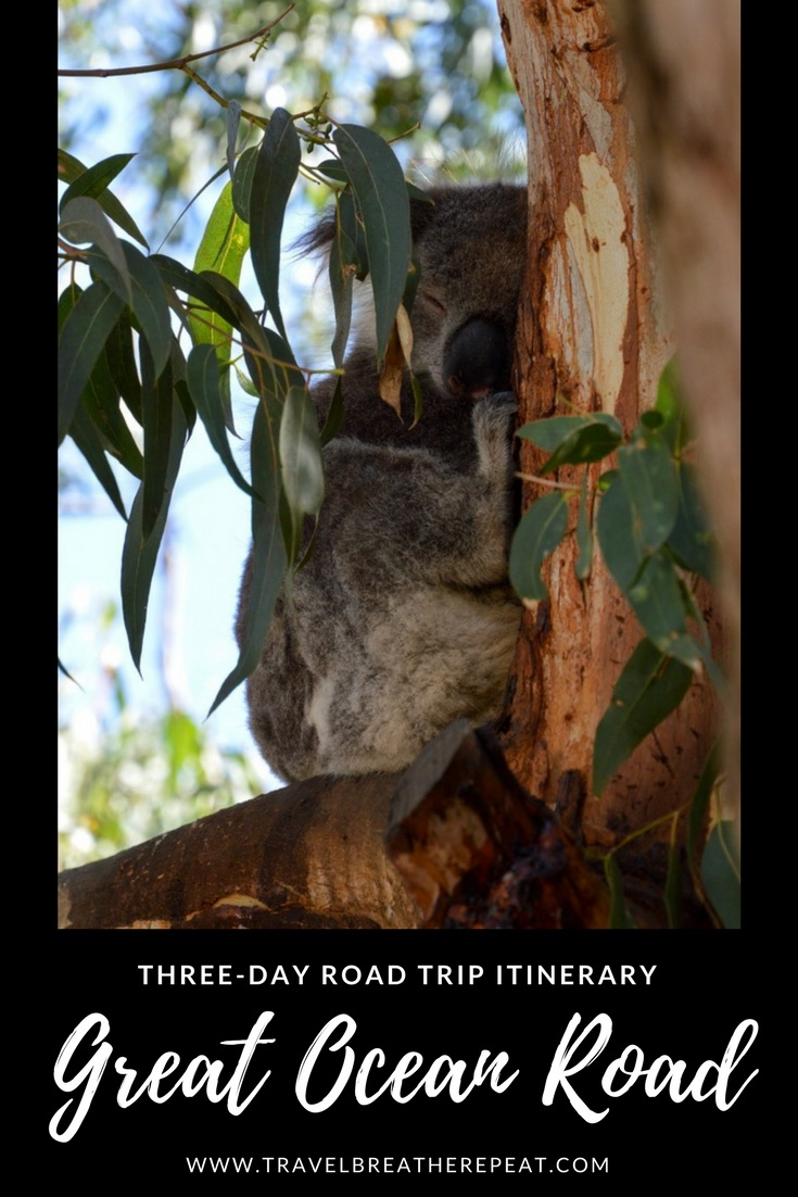 Three-day road trip itinerary for the Great Ocean Road in Australia; drive the Great Ocean Road in Australia; where to see koalas on the Great Ocean Road