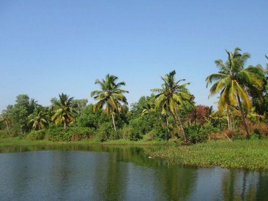 India-Kerala-backwaters-boat-trip